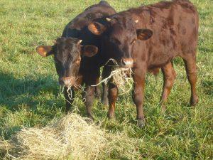 Zig & Axel eating hay